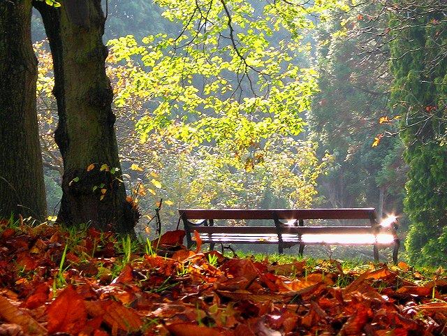 Jesen - fotografije - Page 4 Autumn_in_bristol