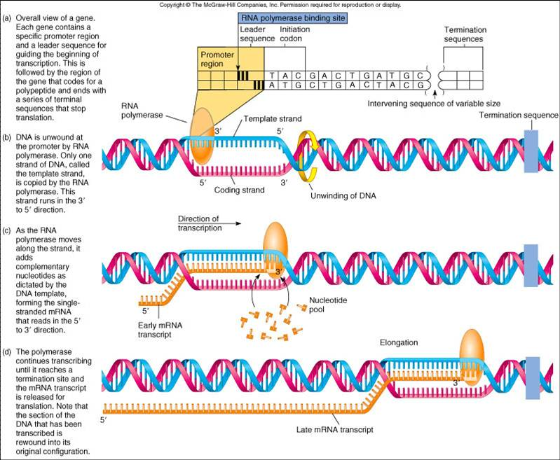 ibbio [licensed for non-commercial use only] / Nucleic Acids and ...